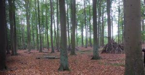 Bild vom Wald in Kühlungsborn