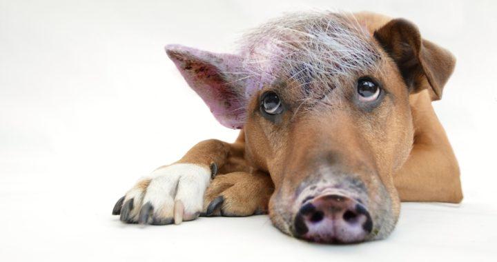 Bild vom inneren Schweinehund